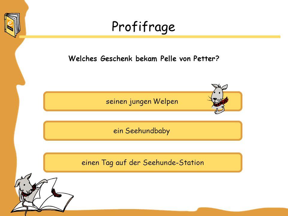 seinen jungen Welpen ein Seehundbaby einen Tag auf der Seehunde-Station Profifrage Welches Geschenk bekam Pelle von Petter?