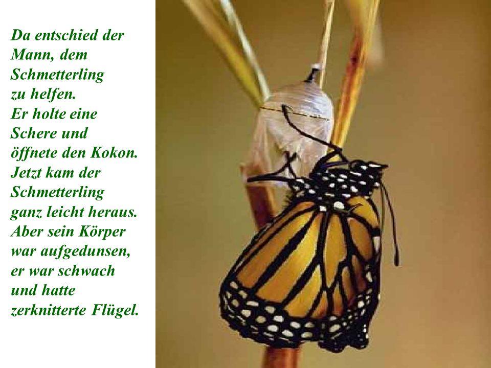 Da entschied der Mann, dem Schmetterling zu helfen.