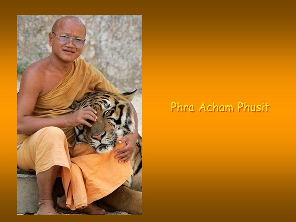 Die Tigers sind gezähmt und fressen nur gekochtes Fleisch, um zu vermeiden, dass sie den Geschmack für frisches Blut entwickeln.