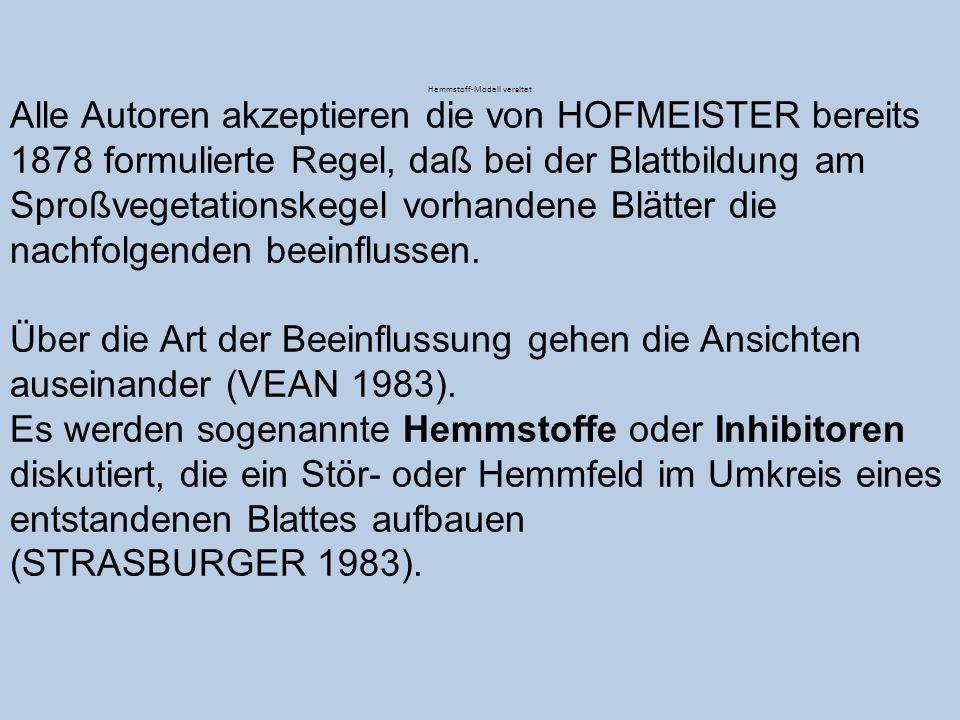 Alle Autoren akzeptieren die von HOFMEISTER bereits 1878 formulierte Regel, daß bei der Blattbildung am Sproßvegetationskegel vorhandene Blätter die n