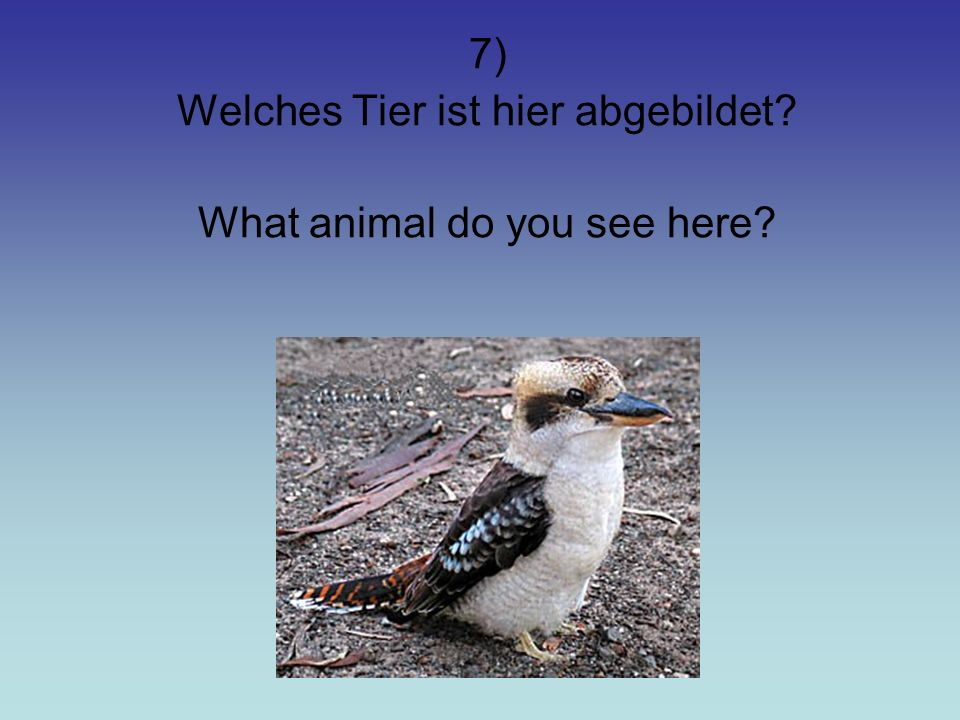 7) Welches Tier ist hier abgebildet? What animal do you see here?