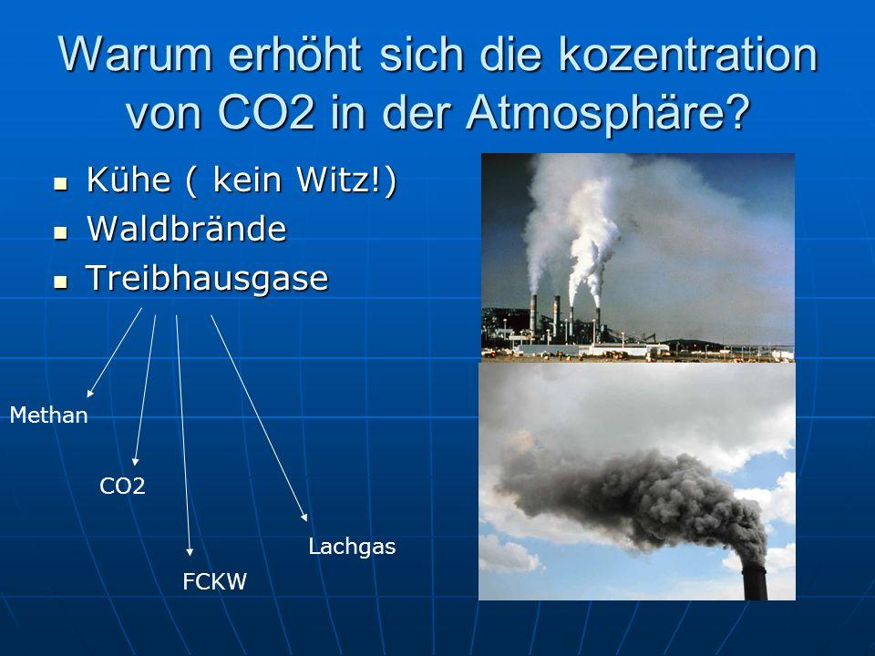 Warum erhöht sich die kozentration von CO2 in der Atmosphäre? Kühe ( kein Witz!) Waldbrände Treibhausgase Methan CO2 FCKW Lachgas