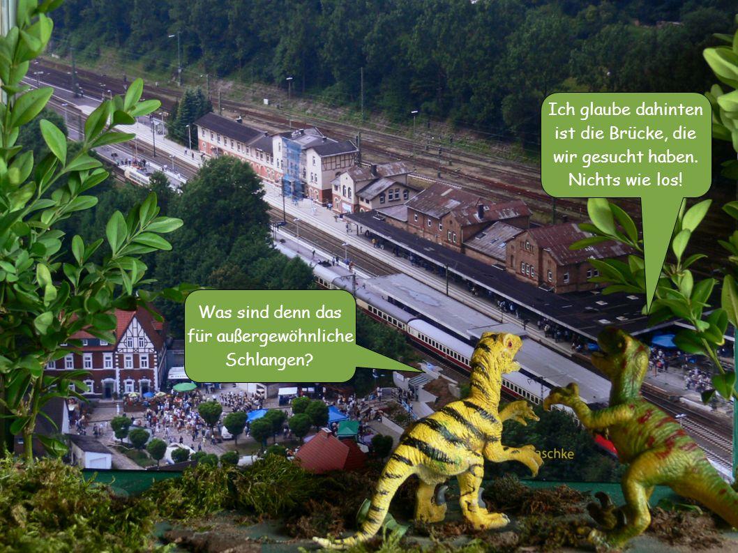 Was sind denn das für außergewöhnliche Schlangen? Ich glaube dahinten ist die Brücke, die wir gesucht haben. Nichts wie los!