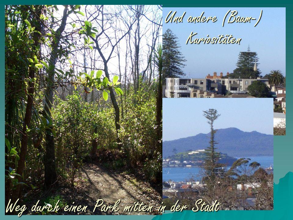 Weg durch einen Park mitten in der Stadt Und andere (Baum-) Kuriositäten