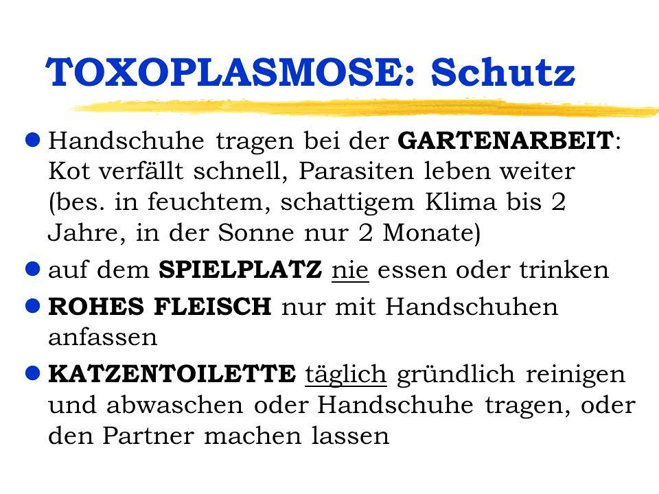 TOXOPLASMOSE: Schutz lHandschuhe tragen bei der GARTENARBEIT : Kot verfällt schnell, Parasiten leben weiter (bes. in feuchtem, schattigem Klima bis 2