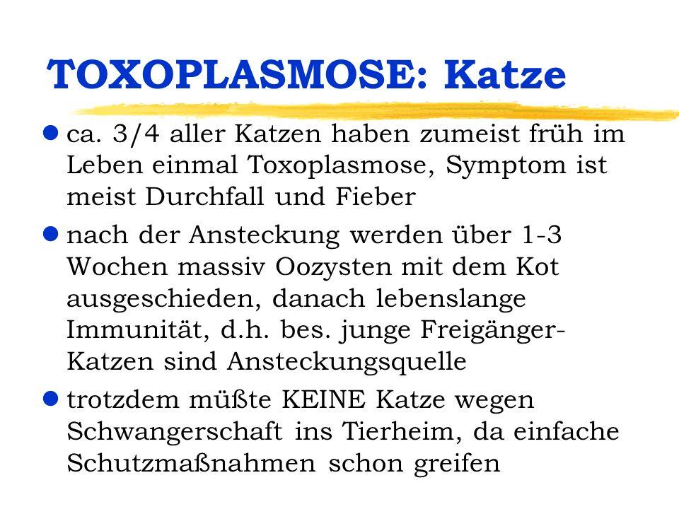 TOXOPLASMOSE: Katze lca. 3/4 aller Katzen haben zumeist früh im Leben einmal Toxoplasmose, Symptom ist meist Durchfall und Fieber lnach der Ansteckung