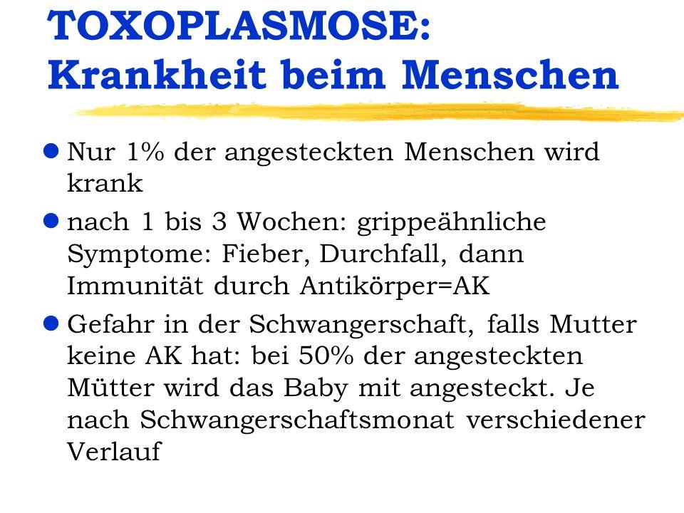 TOXOPLASMOSE: Krankheit beim Menschen lNur 1% der angesteckten Menschen wird krank lnach 1 bis 3 Wochen: grippeähnliche Symptome: Fieber, Durchfall, d