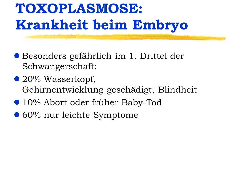 TOXOPLASMOSE: Krankheit beim Embryo lBesonders gefährlich im 1. Drittel der Schwangerschaft: l20% Wasserkopf, Gehirnentwicklung geschädigt, Blindheit