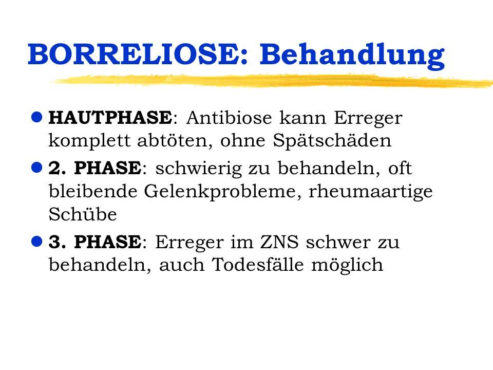 BORRELIOSE: Behandlung l HAUTPHASE : Antibiose kann Erreger komplett abtöten, ohne Spätschäden l 2.