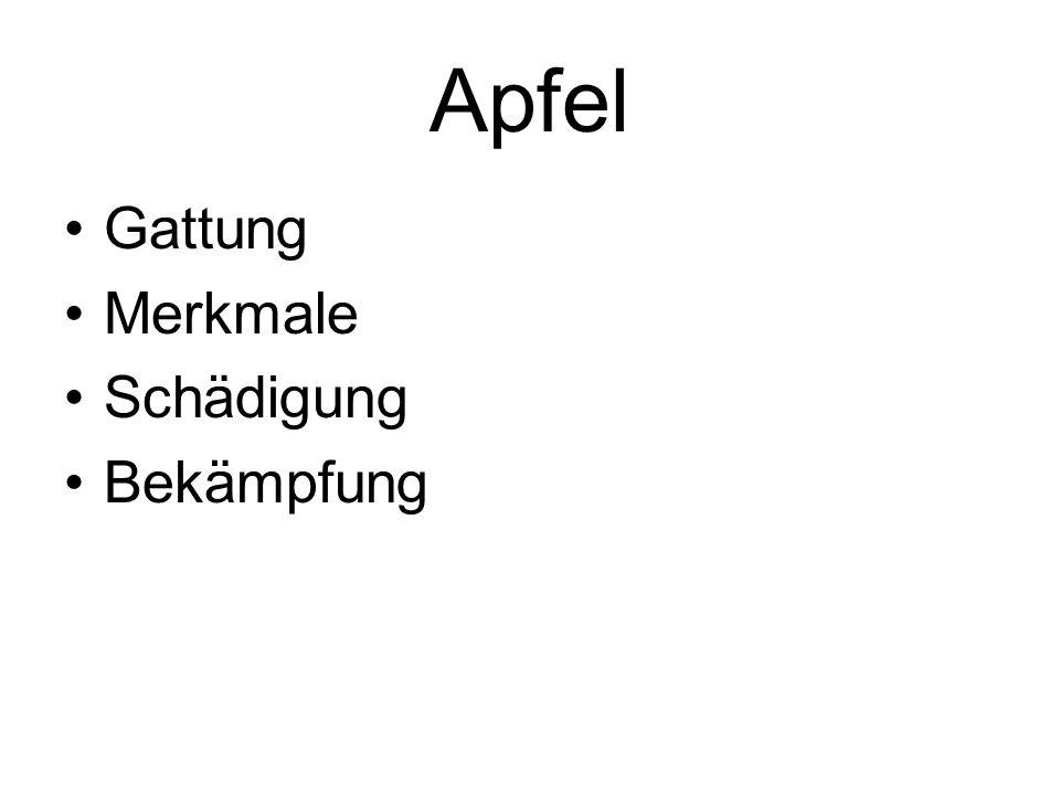 Apfel Gattung Merkmale Schädigung Bekämpfung