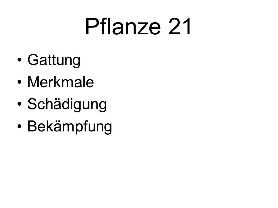 Pflanze 21 Gattung Merkmale Schädigung Bekämpfung