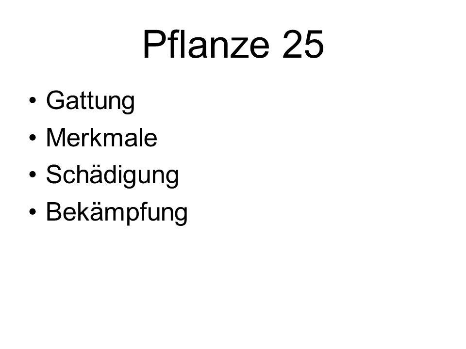 Pflanze 25 Gattung Merkmale Schädigung Bekämpfung