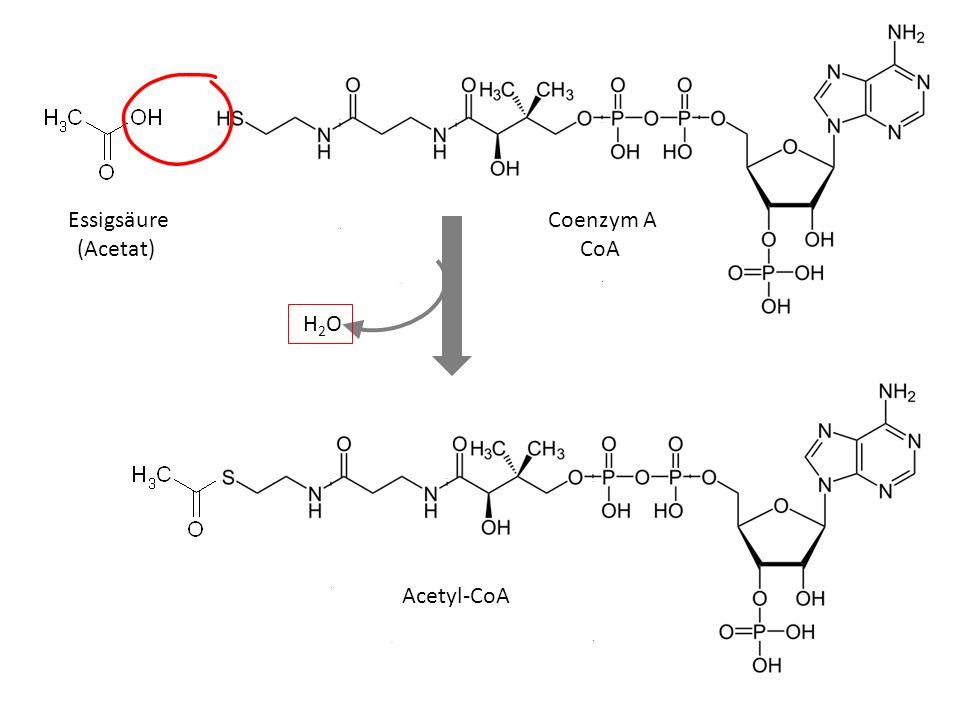 Stoffwechselwege Metabolic pathways