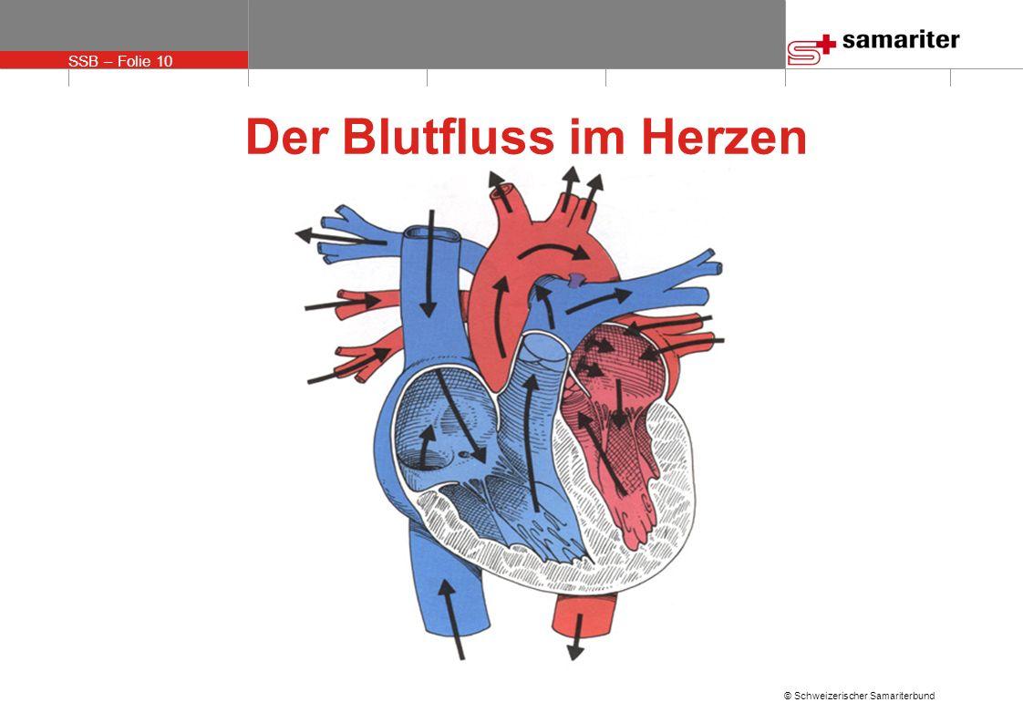 SSB – Folie 10 © Schweizerischer Samariterbund Der Blutfluss im Herzen
