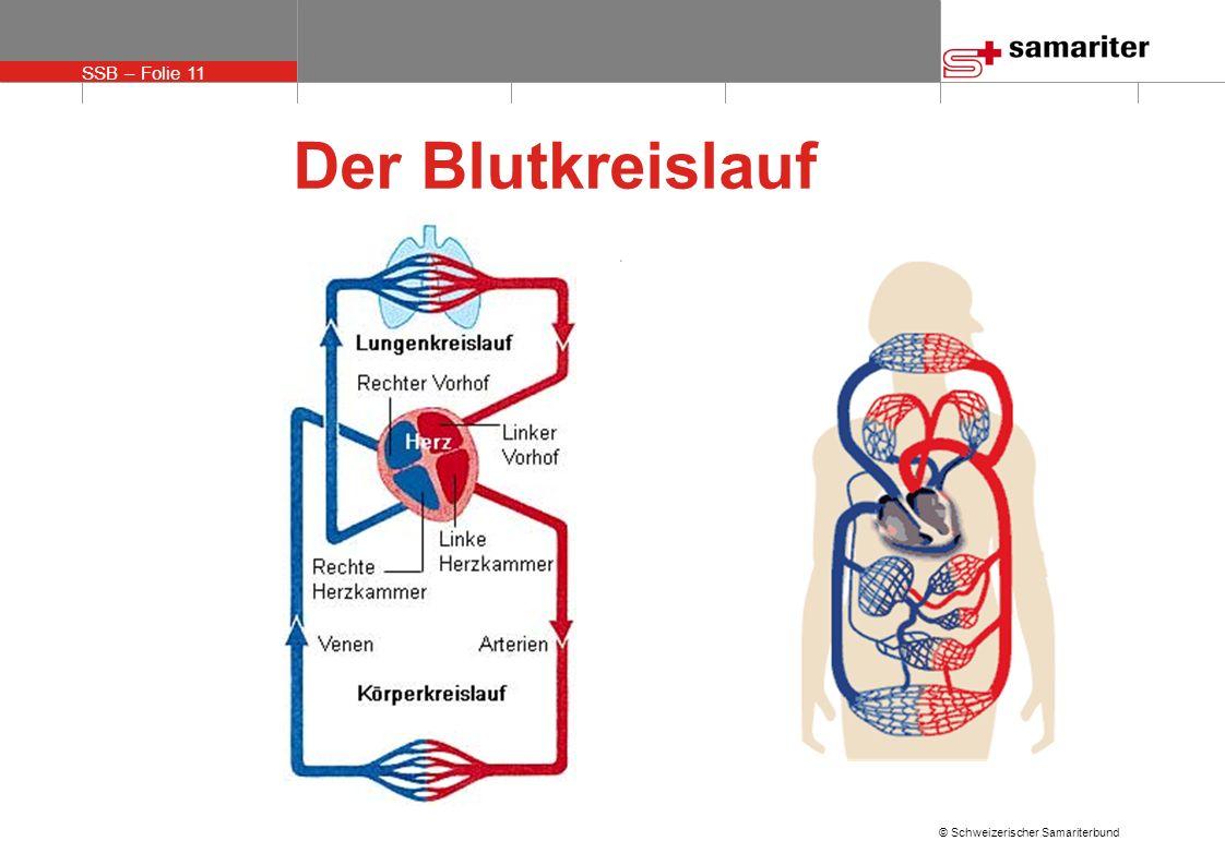 SSB – Folie 11 © Schweizerischer Samariterbund Der Blutkreislauf