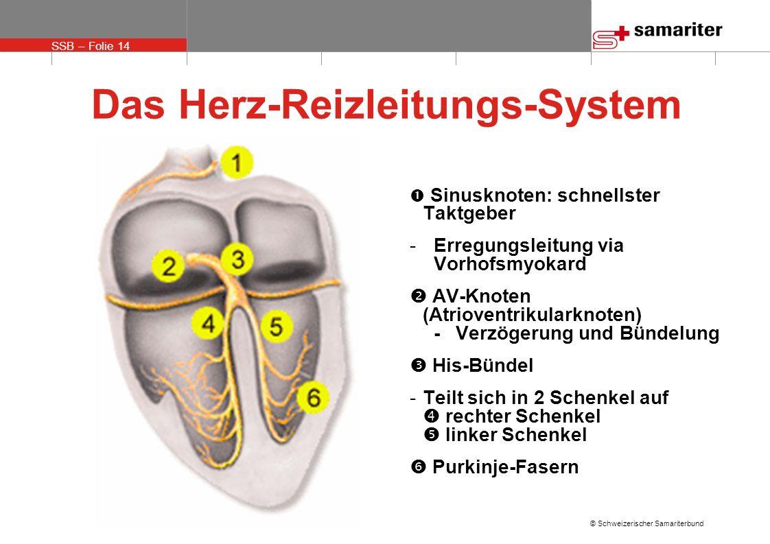 SSB – Folie 14 © Schweizerischer Samariterbund Das Herz-Reizleitungs-System Sinusknoten: schnellster Taktgeber - Erregungsleitung via Vorhofsmyokard A