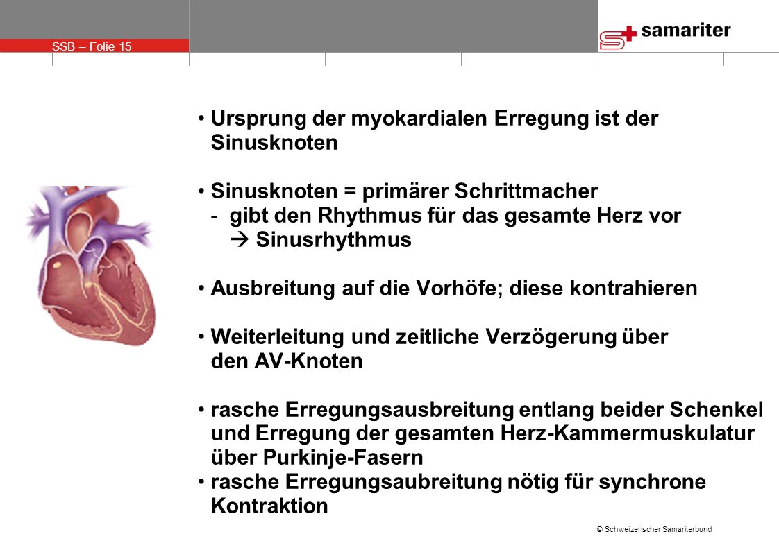 SSB – Folie 15 © Schweizerischer Samariterbund Ursprung der myokardialen Erregung ist der Sinusknoten Sinusknoten = primärer Schrittmacher -gibt den R