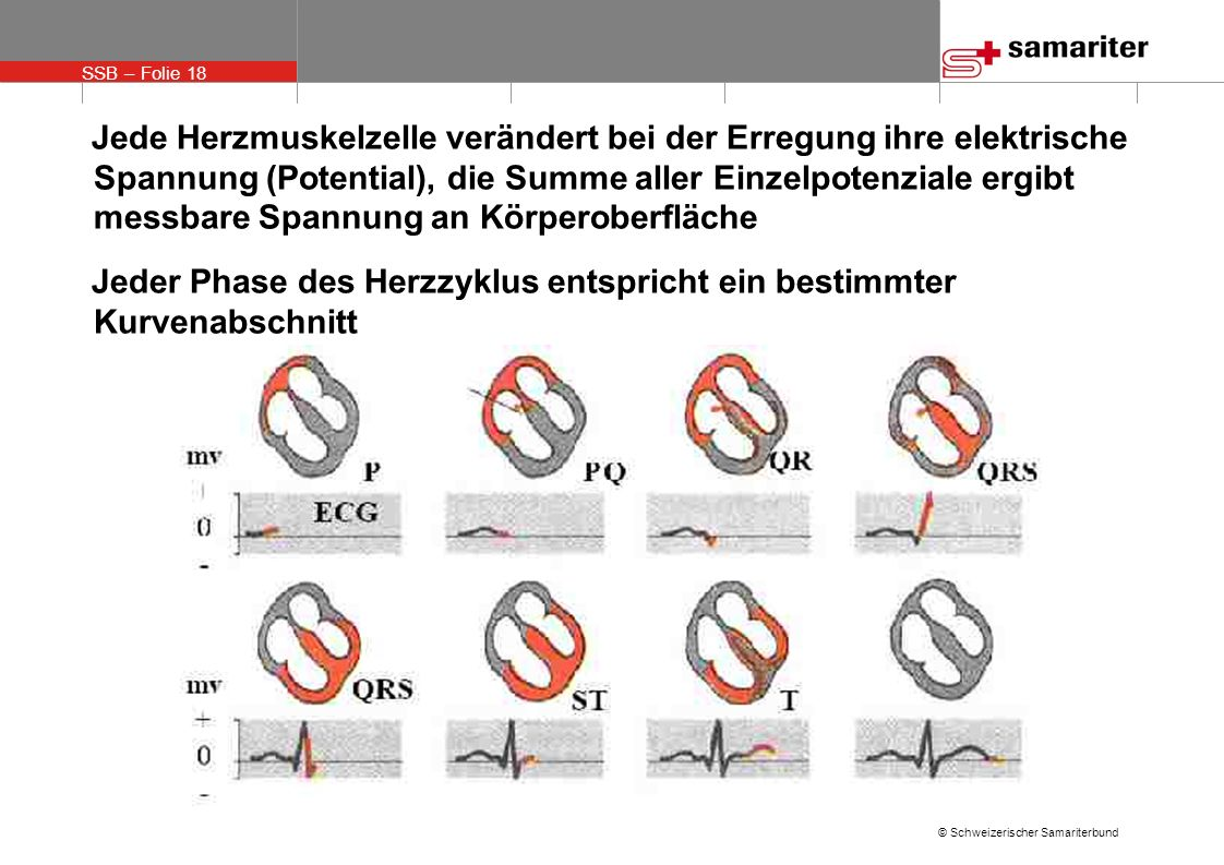 SSB – Folie 18 © Schweizerischer Samariterbund Jede Herzmuskelzelle verändert bei der Erregung ihre elektrische Spannung (Potential), die Summe aller