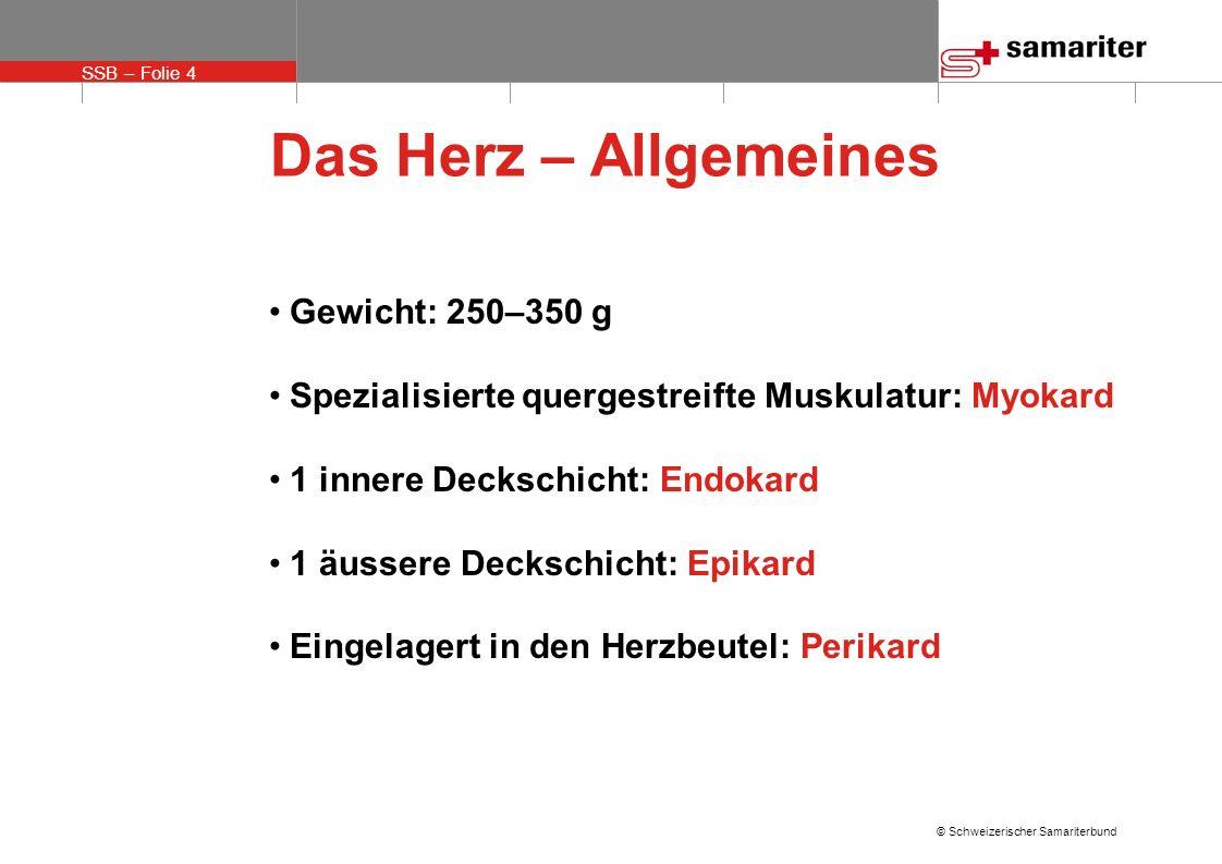 SSB – Folie 4 © Schweizerischer Samariterbund Das Herz – Allgemeines Gewicht: 250–350 g Spezialisierte quergestreifte Muskulatur: Myokard 1 innere Dec
