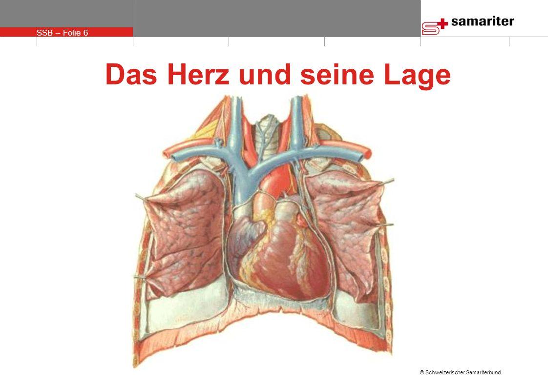 SSB – Folie 6 © Schweizerischer Samariterbund Das Herz und seine Lage