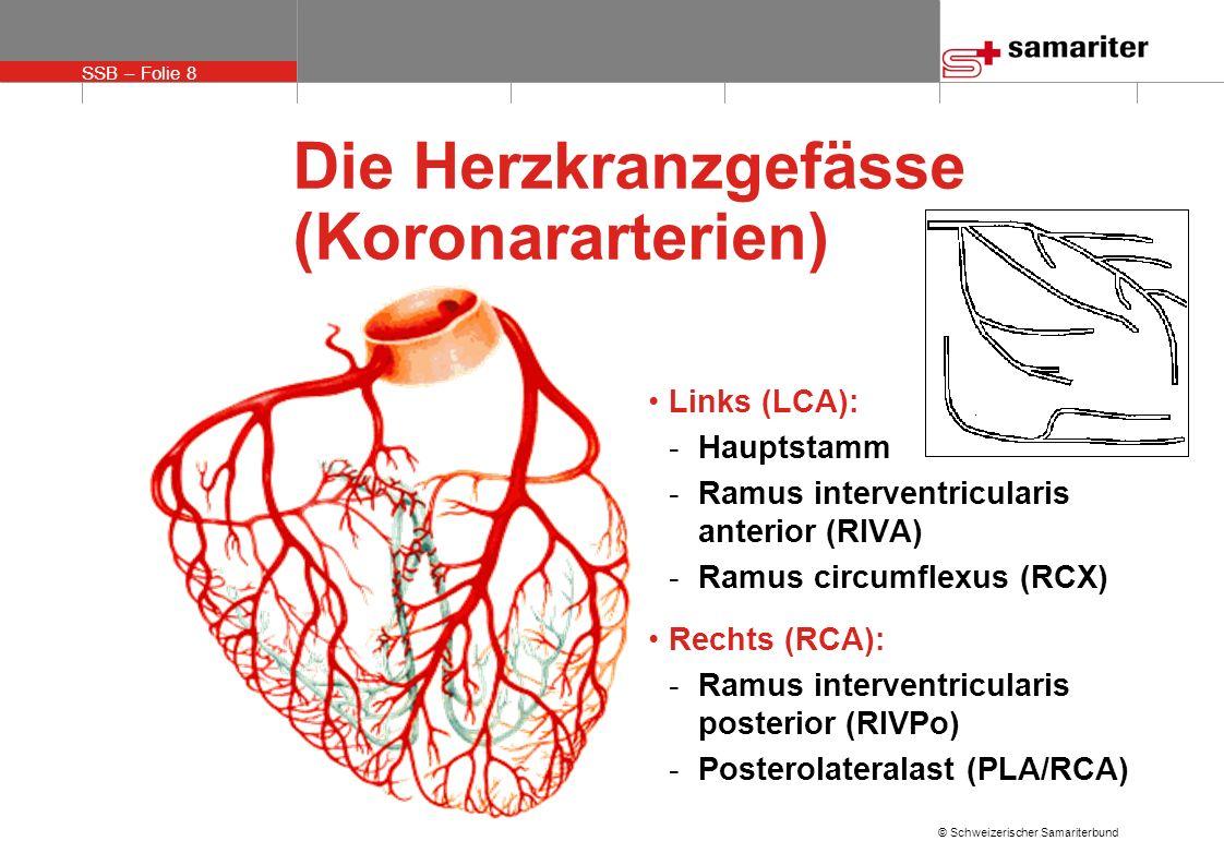 SSB – Folie 8 © Schweizerischer Samariterbund Die Herzkranzgefässe (Koronararterien) Links (LCA): -Hauptstamm -Ramus interventricularis anterior (RIVA