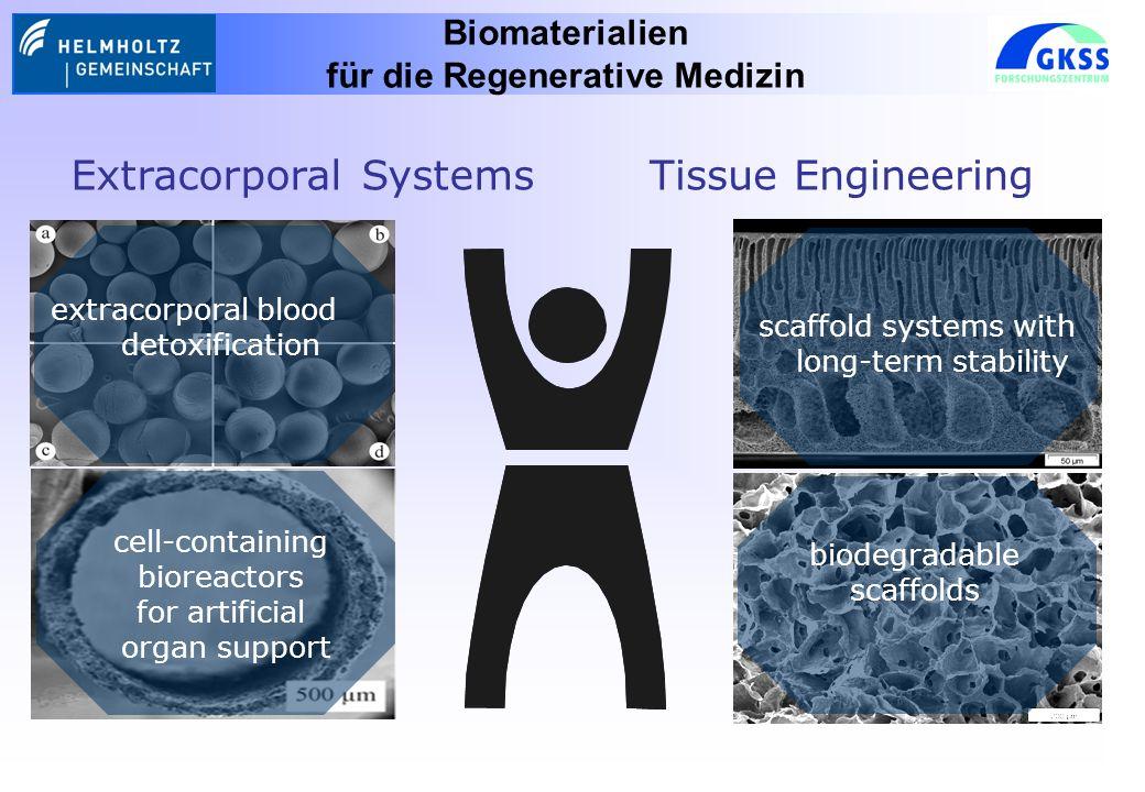cell-containing bioreactors for artificial organ support Biomaterialien für die Regenerative Medizin Extracorporal SystemsTissue Engineering scaffold