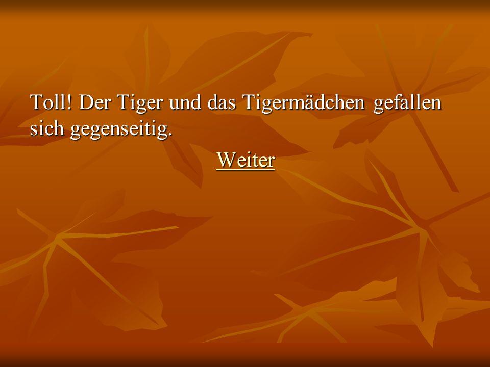 Toll! Der Tiger und das Tigermädchen gefallen sich gegenseitig. Weiter