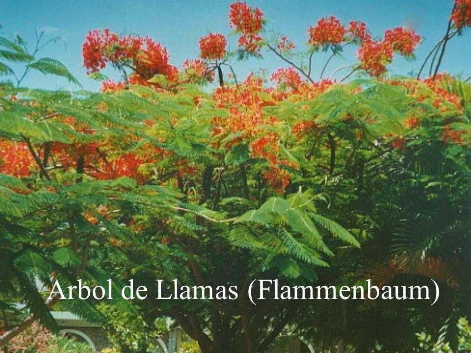 Arbol de Llamas (Flammenbaum)
