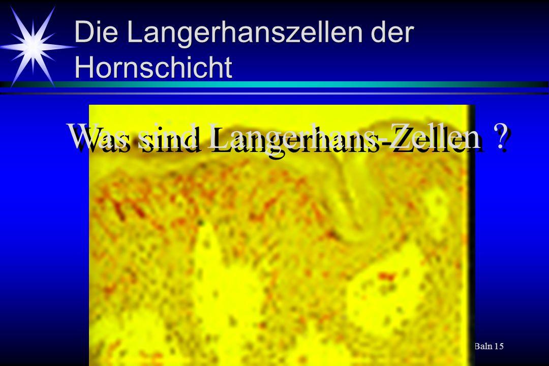 Baln 15 Die Langerhanszellen der Hornschicht Was sind Langerhans-Zellen ?