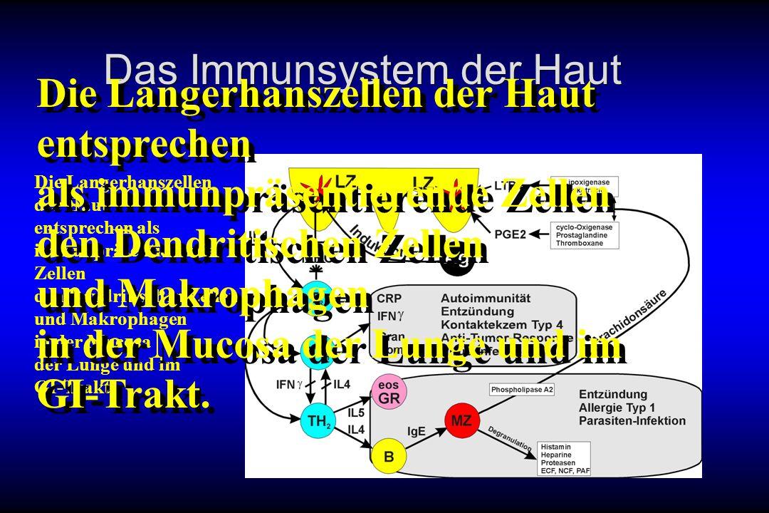 Das Immunsystem der Haut Die Langerhanszellen der Haut entsprechen als immunpräsentierende Zellen den Dendritischen Zellen und Makrophagen in der Muco