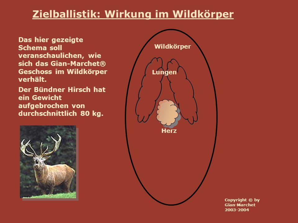 Zielballistik: Wirkung im Wildkörper Wildkörper Lungen Herz Das hier gezeigte Schema soll veranschaulichen, wie sich das Gian-Marchet® Geschoss im Wil