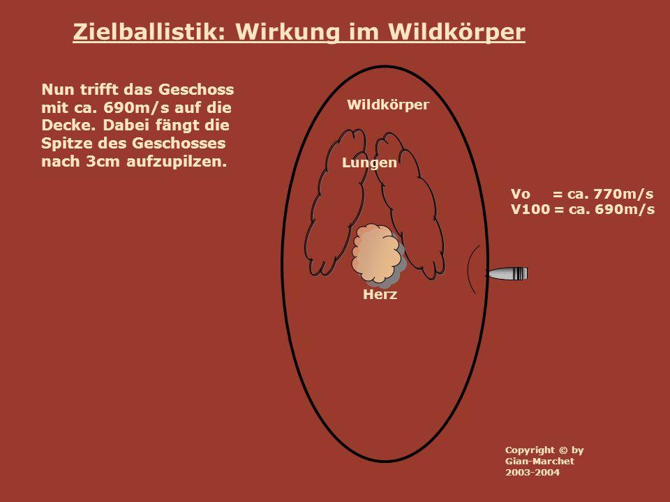 Wildkörper Lungen Herz Vo = ca. 770m/s V100 = ca. 690m/s Zielballistik: Wirkung im Wildkörper Nun trifft das Geschoss mit ca. 690m/s auf die Decke. Da