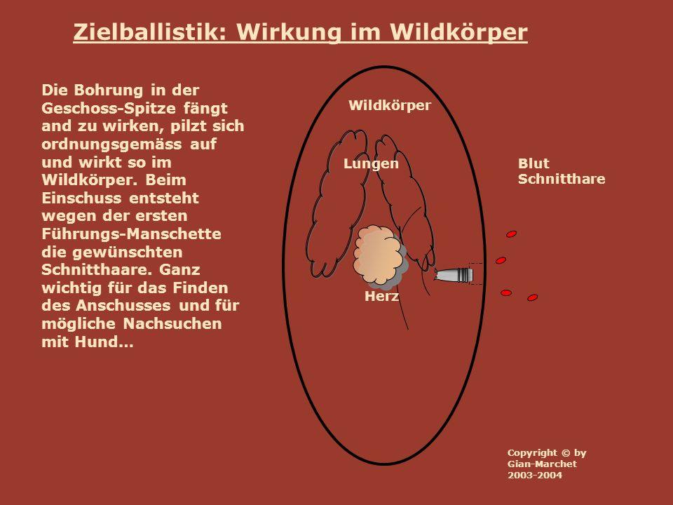 Wildkörper Lungen Herz Zielballistik: Wirkung im Wildkörper Blut Schnitthare Die Bohrung in der Geschoss-Spitze fängt and zu wirken, pilzt sich ordnun