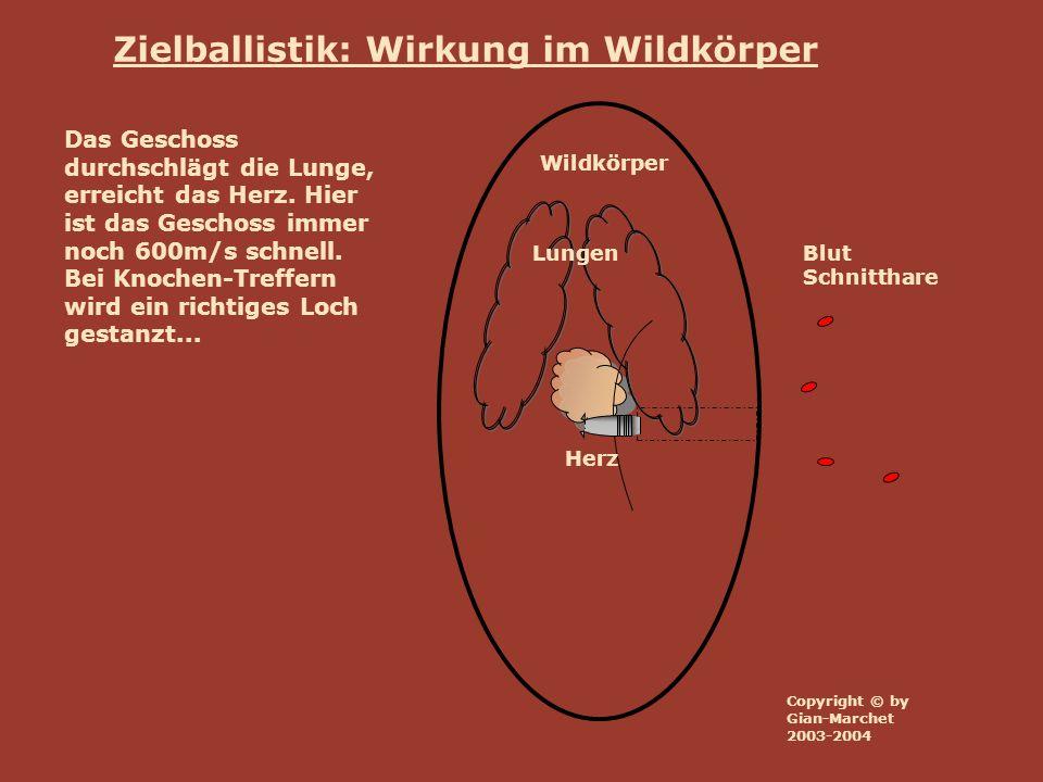 Wildkörper Lungen Herz Blut Schnitthare Zielballistik: Wirkung im Wildkörper Das Herz ist durchschossen, der zweite Lungen-Flügel wird durchbohrt.