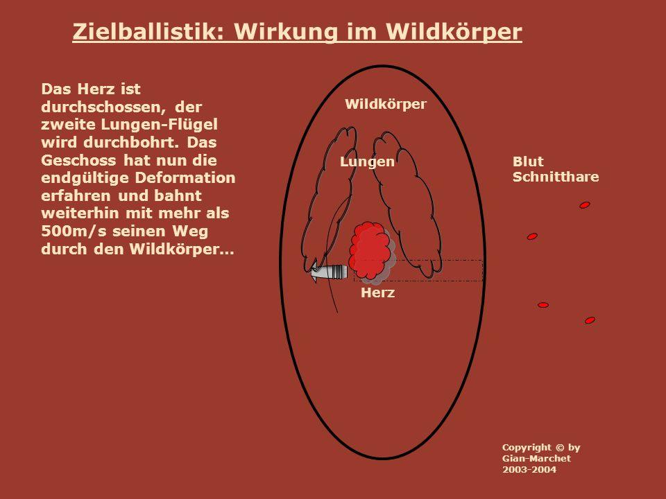 Wildkörper Lungen Herz Blut Schnitthare Zielballistik: Wirkung im Wildkörper Das Herz ist durchschossen, der zweite Lungen-Flügel wird durchbohrt. Das