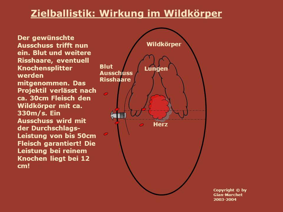 Wildkörper Lungen Herz Blut Ausschuss Risshaare Zielballistik: Wirkung im Wildkörper Der Kreislauf des Tieres bricht zusammen.
