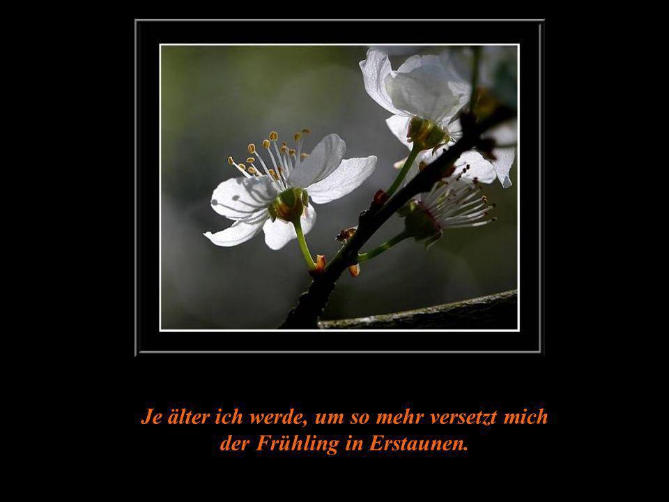 An jedem Frühlingsanfang denke daran, dass ein einfacher Blick auf eine Blume Dir einen Glückstag bringen kann...