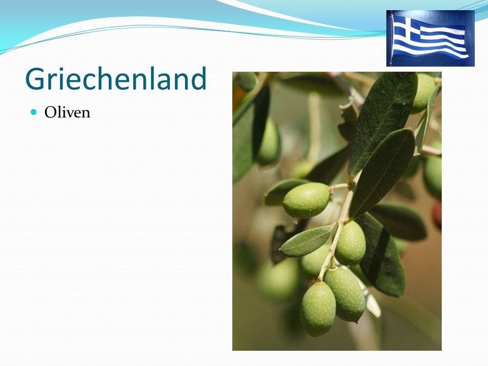Griechenland Oliven