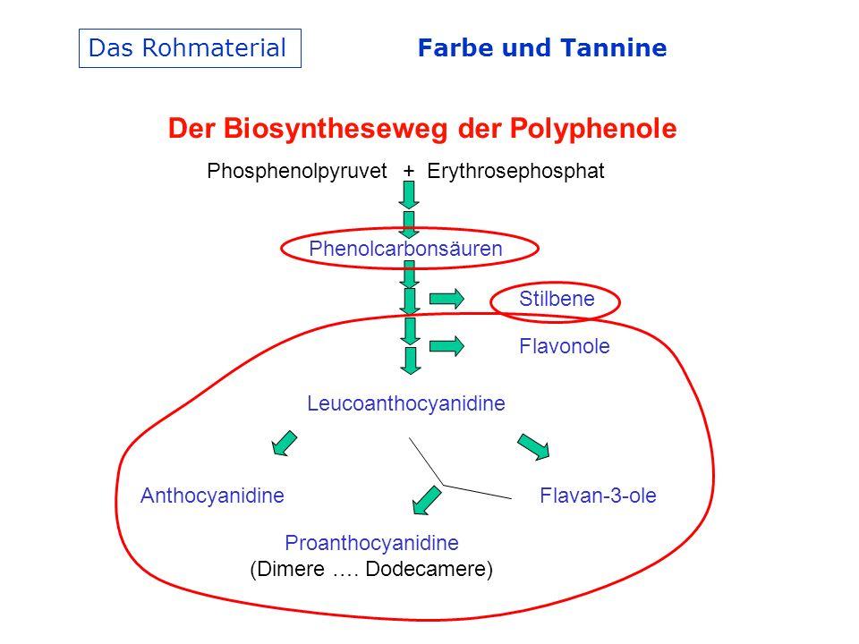 Farbe und Tannine Das Rohmaterial Der Biosyntheseweg der Polyphenole Phosphenolpyruvet + Erythrosephosphat Phenolcarbonsäuren Leucoanthocyanidine Stilbene Flavonole AnthocyanidineFlavan-3-ole Proanthocyanidine (Dimere ….
