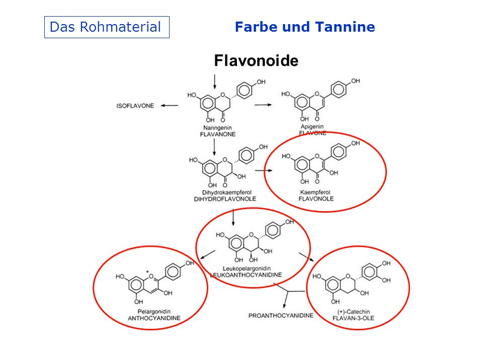 Farbe und Tannine Das Rohmaterial Flavonoide