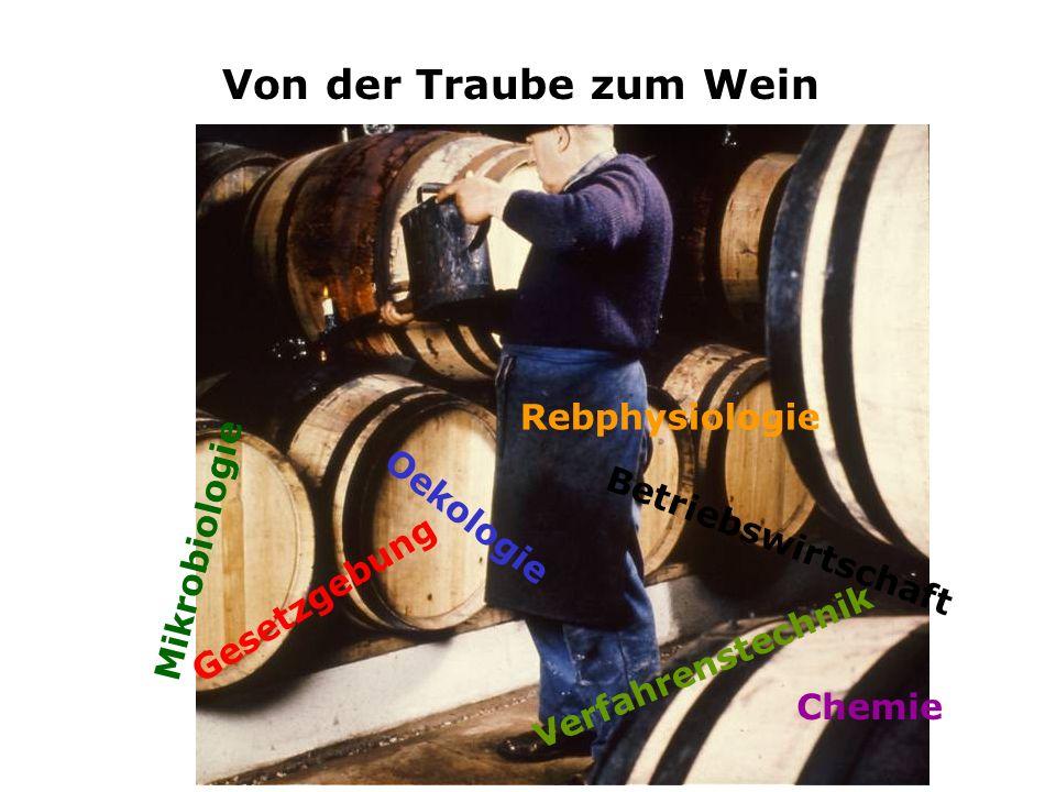Von der Traube zum Wein Die Weinbereitung als multidisziplinäre Technologie Chemie M i k r o b i o l o g i e Rebphysiologie O e k o l o g i e B e t r i e b s w i r t s c h a f t G e s e t z g e b u n g V e r f a h r e n s t e c h n i k