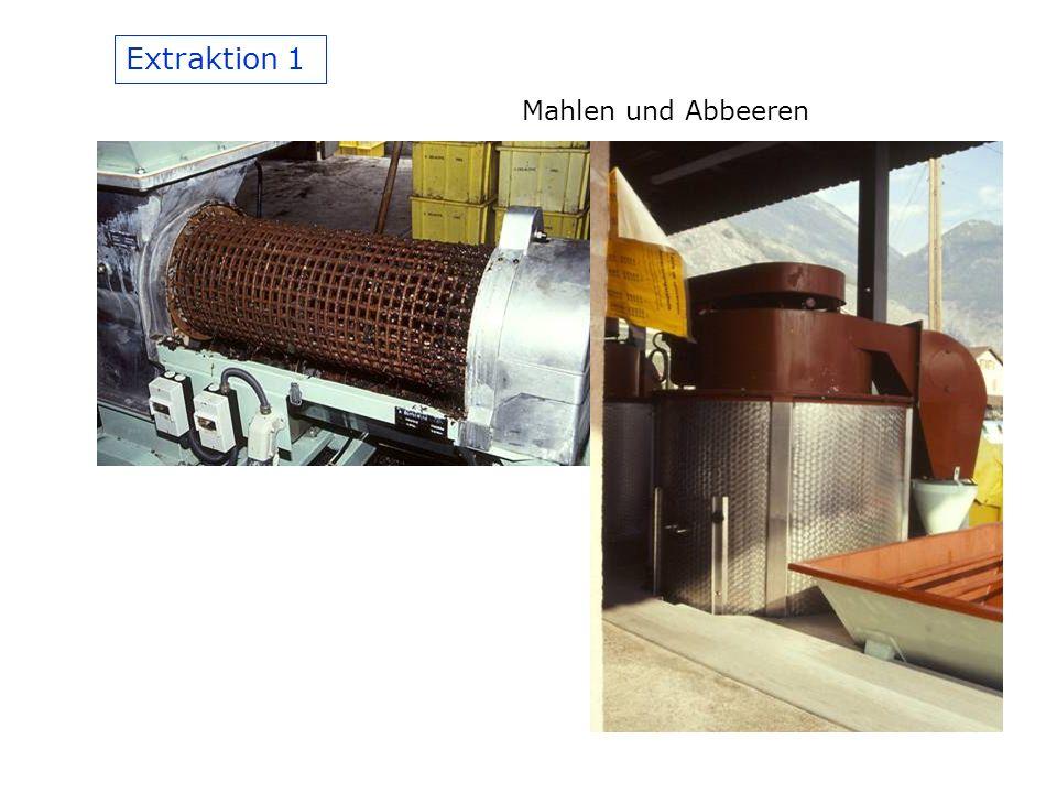 Extraktion 1 Mahlen und Abbeeren
