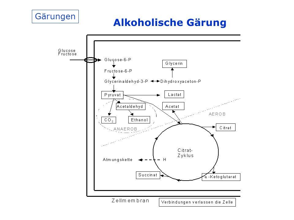 Gärungen Alkoholische Gärung