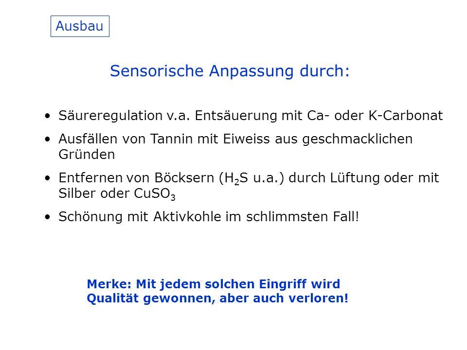 Ausbau Sensorische Anpassung durch: Säureregulation v.a.