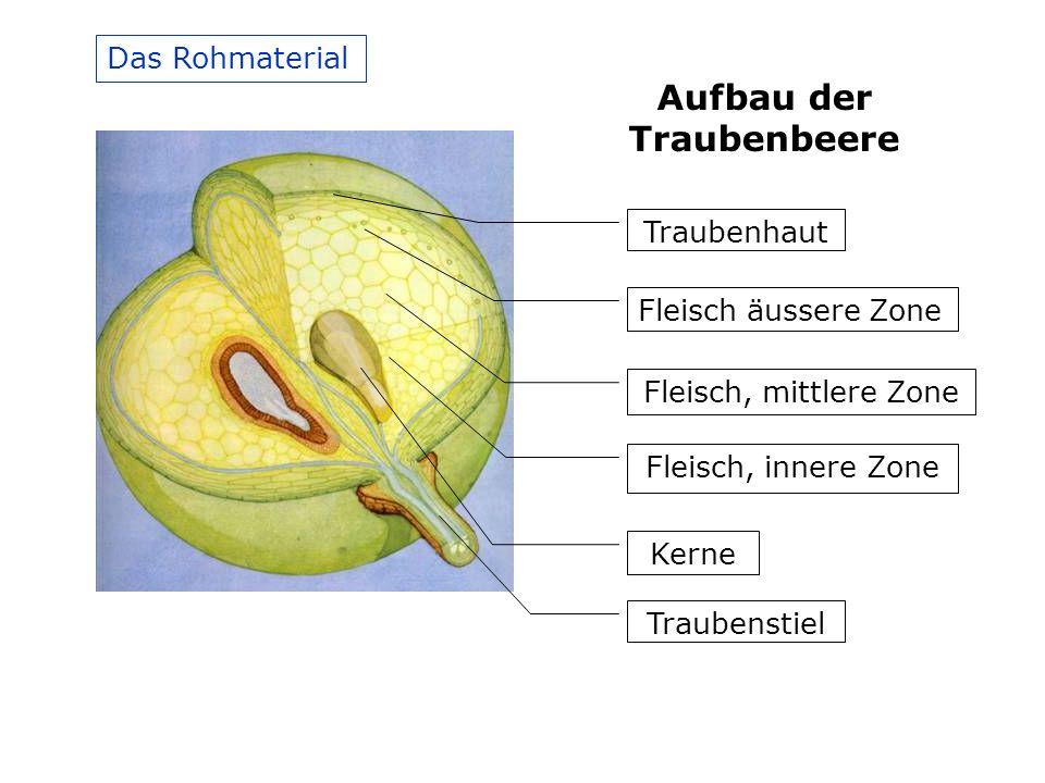 Das Rohmaterial Traubenhaut Fleisch äussere Zone Fleisch, mittlere Zone Fleisch, innere Zone Kerne Traubenstiel Aufbau der Traubenbeere
