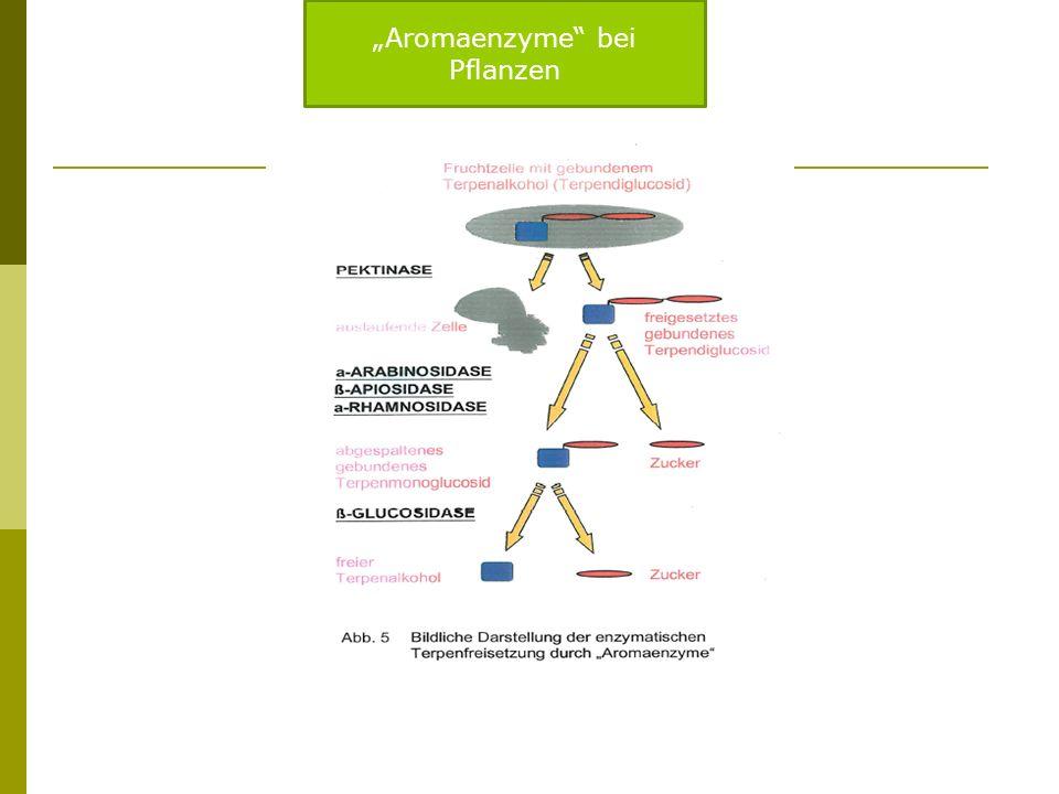 Aromaenzyme bei Pflanzen