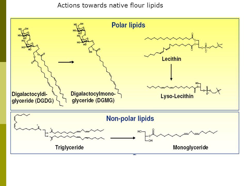 Actions towards native flour lipids