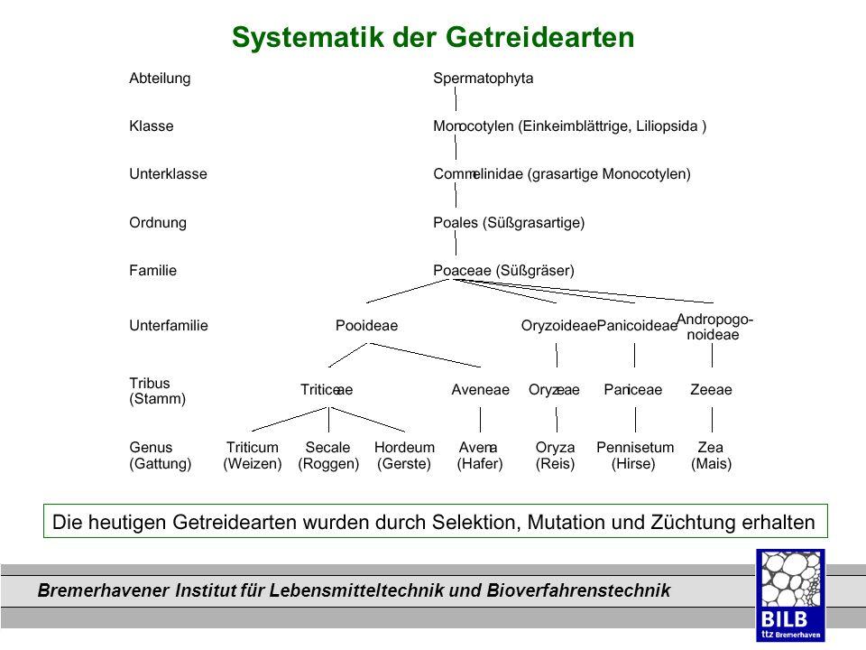 Bremerhavener Institut für Lebensmitteltechnik und Bioverfahrenstechnik Dateinamen Systematik der Getreidearten