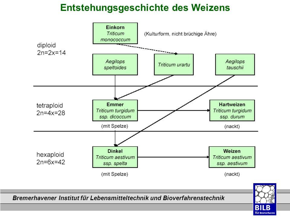 Bremerhavener Institut für Lebensmitteltechnik und Bioverfahrenstechnik Dateinamen Entstehungsgeschichte des Weizens