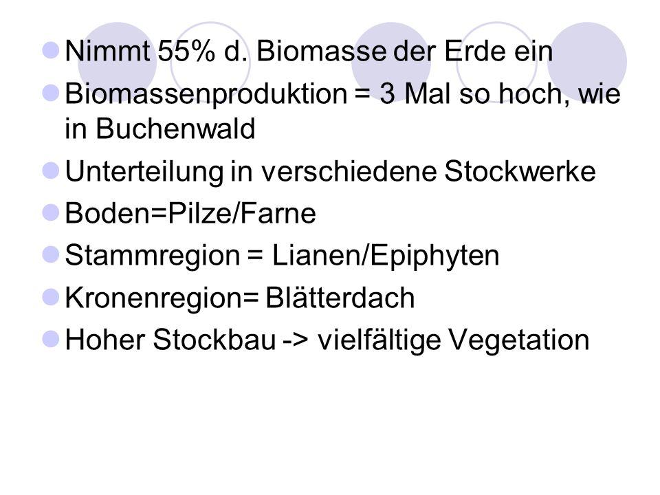 Nimmt 55% d. Biomasse der Erde ein Biomassenproduktion = 3 Mal so hoch, wie in Buchenwald Unterteilung in verschiedene Stockwerke Boden=Pilze/Farne St